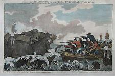 Captain Cook - Walrösser - Originaler Kupferstich von Baldwyn aus 1794