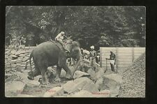Elephant Posted Collectable Animal Postcards