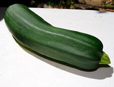 Black Beauty Zucchini Summer Squash 25 seeds * Heirloom *Non GMO* CombSH H11