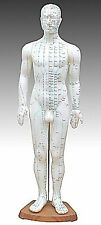 """Model Anatomy Professional Medical Acupuncture Male 60cm 24"""" IT-106 USA ARTMED"""