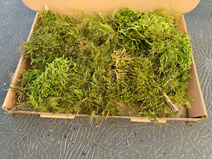 Live Sphagnum Moss fresh picked to order from EXMOOR 1kg Free Postage