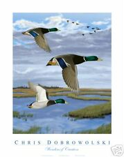 NEW Mallard Ducks 18x24 Art Print Poster by Dobrowolski