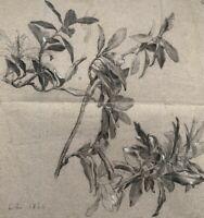 LE MULHOUSIEN EMILE ZIPELIUS (1840-1865) ETUDE BOTANIQUE vers 1860 (11)