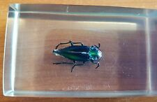 Vintage Colorful Beetle (Unknown Species) Specimen in Perspex Holder Amazing