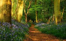Lámina-Bluebell paseo por el bosque (imagen Poster Flores forestales)