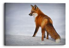 Fox Mammal Animal Nature Cute Close Up Fox Animal Mammal Canvas Wall Art Pi.