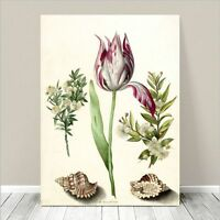 "Beautiful Vintage Floral Sea Art ~ CANVAS PRINT 36x24"" Tulip and Shells"