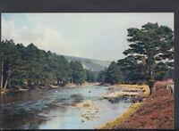 Scotland Postcard - The River Dee Near Braemar, Aberdeenshire T889