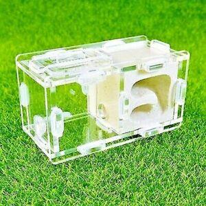 Mini Nest Farm Gypsum Formicarium for Queen Ant