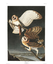 1830 John Audubon - Barn Owl and Ground Squirrel Havell Edition