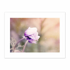 Pink Anemone Flower Canvas Wall Art Print