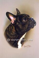 French Bulldog Head Study Print by Robert J. May