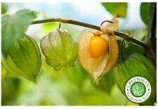 Melon D/'INDE 10 Snap Melon Phut exotiques Graines