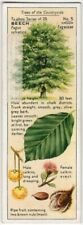 European Beech Aspen Tree Fagus sylvatica 1930s Trade Ad Card