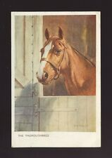 Animals HORSES Artist Whydale The Thoroughbred Used 1951 PPC