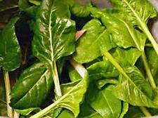 Swiss Chard Seed, Perpetual Spinach, Heirloom, Organic 100+ Seeds, NON GMO