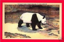 Happy Giant Panda Forest Park Zoo St Louis Post Card