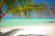 Fototapete Am Strand Nr. 448 Größe: 400x280cm Südsee Palmen Meer Sonne Tapete