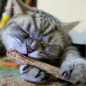 15/20pcs Natural Fruit Matatabi Cat Snacks Sticks Catnip Pet Cat Molar Rod