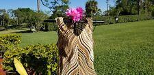Alfani petites silk top size 10P. Gorgeous!!!