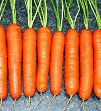 Scarlet Nantes Carrot 1500 seeds * NON GMO * ez grow * CombSH I21