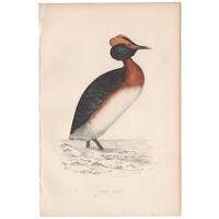 Morris Birds antique 1863 hand-colored engraving print Pl 301 Dusky Grebe