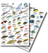 FISH Sea Life ID Card MARINE LIFE - Baja California, USA