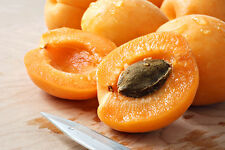 5 Apricot (Prunus armeniaca) -tree seeds - Delicious fruit!Easy to plant!!