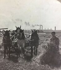 Stereoscope - Harvesting Wheat Near Iron Works - Caen N France