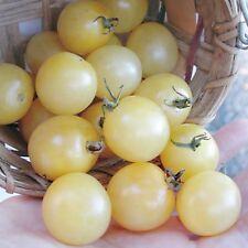 TOMATE CEREZA BLANCO white cherry 140 Semillas Seeds