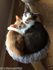 SPONSOR HELP FEED CAT HUGGING KITTEN OUTSIDER CAT RESCUE Rec CUTE COLOR PHOTO