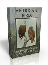 American Birds - over 530 public domain images on DVD