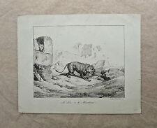 Lithographie de Vernet vers 1820 , Le lion et le moucheron , La Fontaine