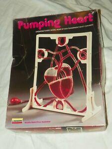 LINDBERG PUMPING HEART PLASTIC MODEL HEART KIT TRANSPARENT HEART CHAMBERS