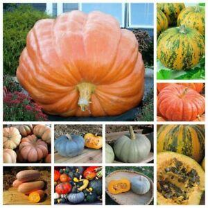 Seeds Ornamental Pumpkin Mix Giant Titan Muscat Blue Garden Vegetable Organic