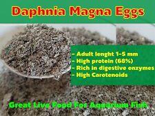 DAPHNIA MAGNA EGGS (WATER FLEA) GREAT LIVE FOOD FOR AQUARIUM FISH BETTA GUPPY