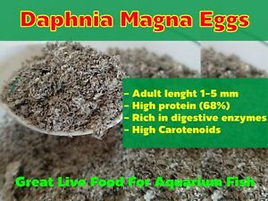 DAPHNIA MAGNA EGGS (WATER FLEA) GREAT LIVE FOOD FOR AQUARIUM FISH BETTA GUPPY