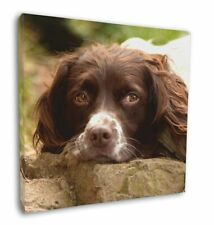 "Springer Spaniel Dog 12""x12"" Wall Art Canvas Decor, Picture Print, AD-SS1-C12"