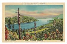 Dead Tree COLUMBIA RIVER GORGE Between WASHINGTON & OREGON Postcard WA OR Linen