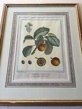 Duhamel du Monceau, Botanical, Pomona Gallica Prunier A Fleur Etching Print
