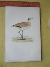 Vintage BIRD PRINT,British Birds,COURSER,F.O.Morris,1896