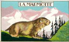 The alpine marmot groundhog mammal mammal alps image old card