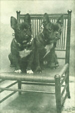 French Bulldog Dogs 1909 Antique Photo ~ 8 New Large Note Cards