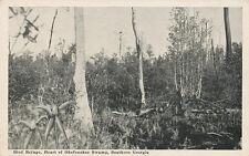 GA * Bird Refuge, Heart of Okefenokee Swamp Southern Georgia  1930s Flanders