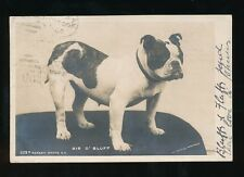 Dogs BULL DOG Bib o' Bluff Used 1903 RP PPC by Rotary