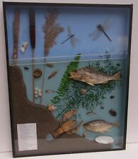 Antiker Süßwasser Schul Lehr Schaukasten Diorama Modellbau Bild