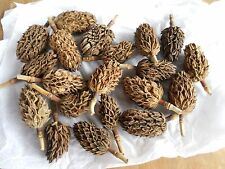 Lot of 20 Small - Medium Magnolia Seed Pods for Crafting or Potpourri