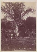 Madagascar Vintage papier citrate 1902