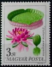 HUNGARY - 1965 - FLOWERS - Victoria Water Lily (Victoria amazonica) - MNH  #1715