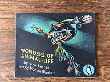 Papageientaucher Bilderbuch 44 Wunder der Tierwelt von Monica verkürzen